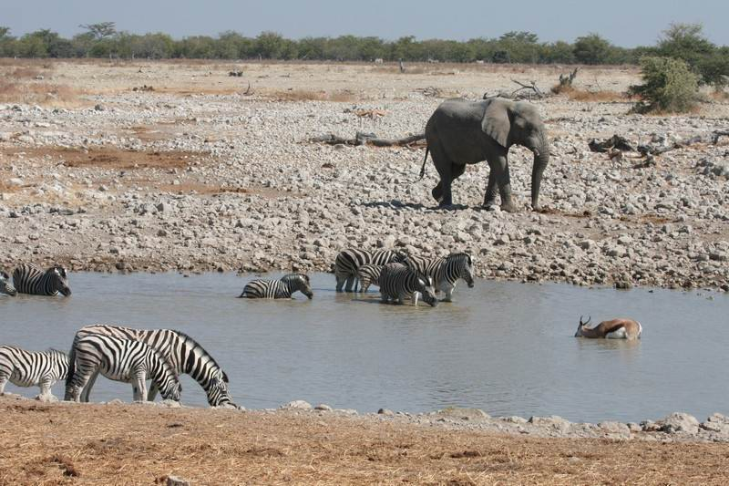 Etosha-Animal-mix-scenes.jpg