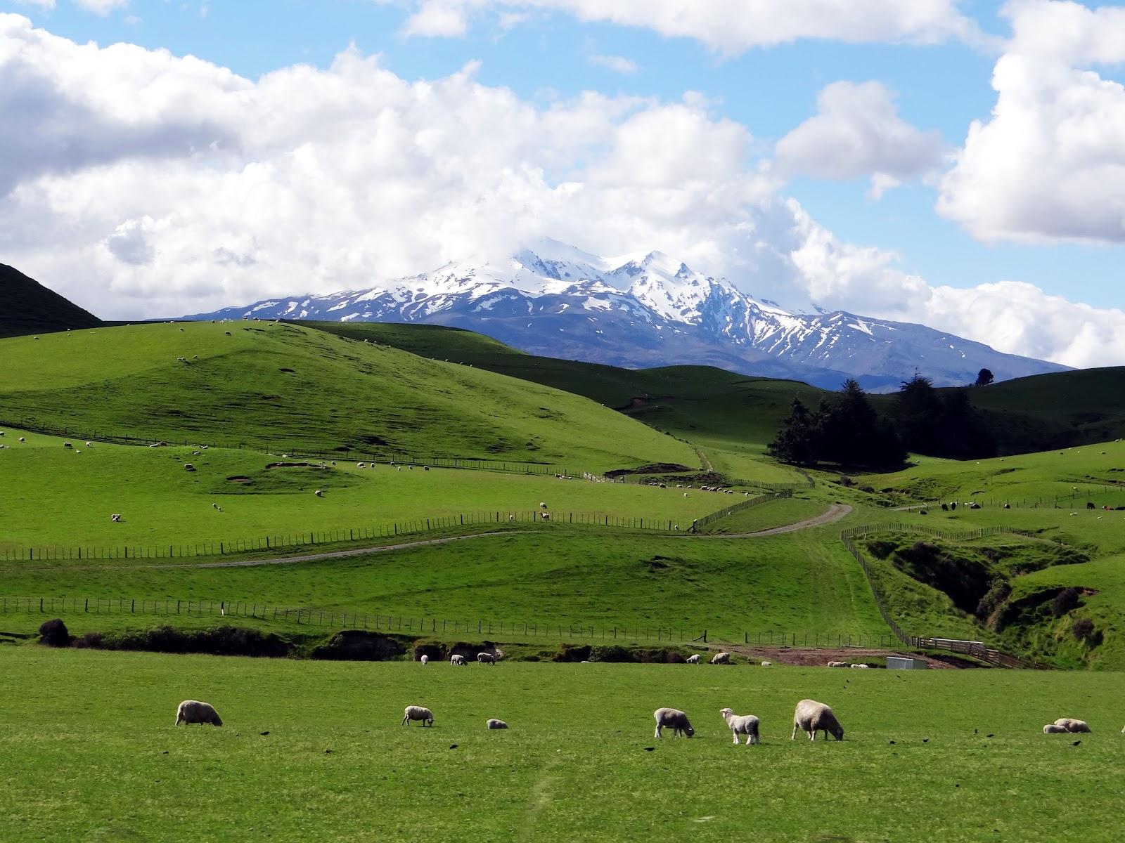 Zoznamka v meste Christchurch Nový Zéland