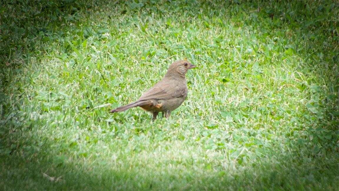 Yard Bird 2.jpg