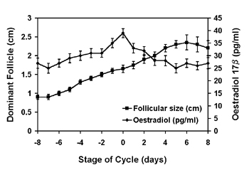 Mean (+s.e.m.) serum oestradiol-17β concentrations (triangle) related to follicle diameter (square) in non-pregnant camels.