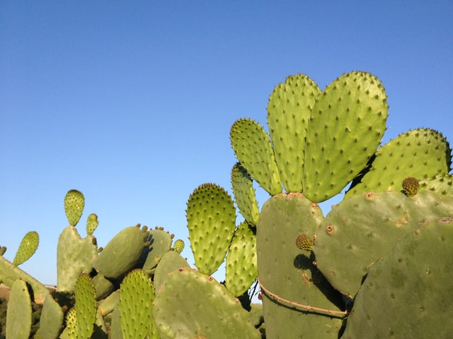 5 Tips for Creating a Drought-Tolerant Yard