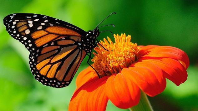 Image result for kupu kupu dengan bunga