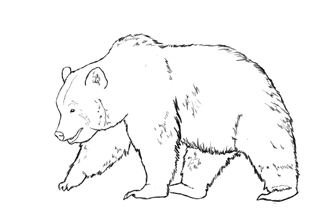 draw a bear with basic shapes