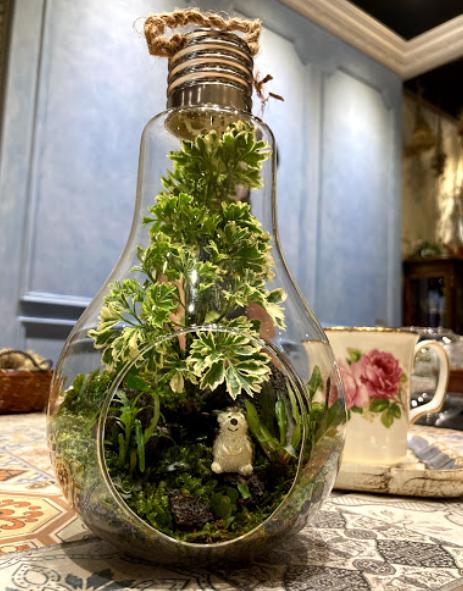 微景觀苔蘚生態燈泡球