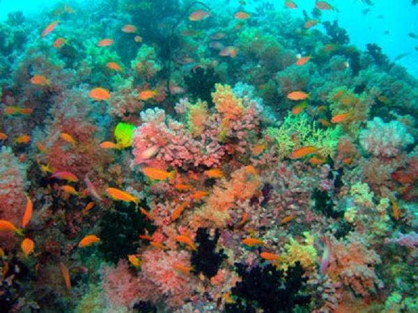 Image result for hp reef maldives