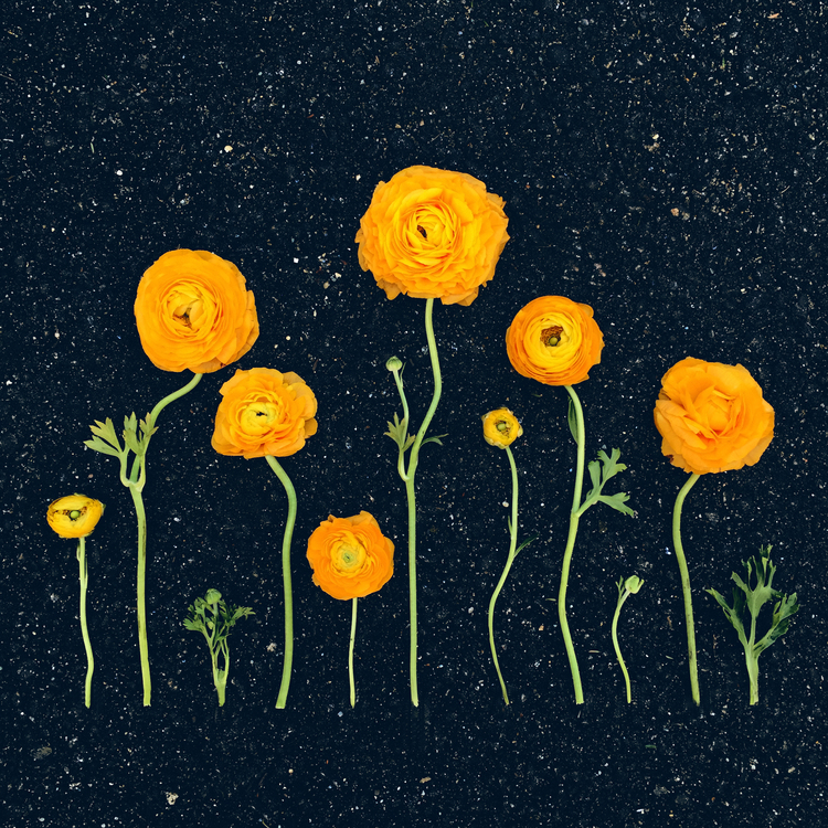 Space Flowers Kristen Meyer