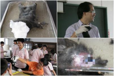 http://www.tanews.org.tw/sites/default/files/gao_zhong_lao_shi_jie_pou_tu_zi_-1.jpg