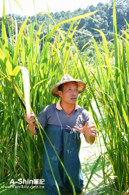桃米休閒農業區10