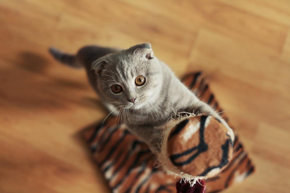 Kitten Scratching Scratching Post