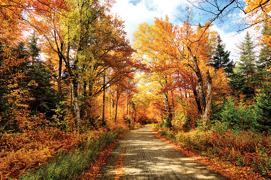 Image result for fall in new england
