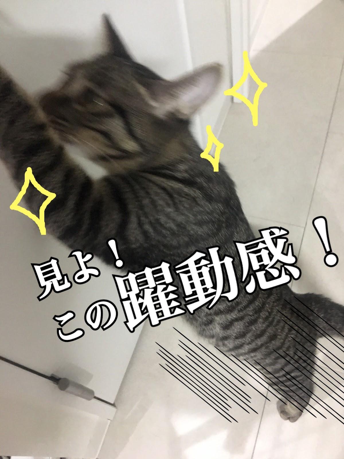 猫の写真を可愛く撮る方法!素人でも出来る撮り方のコツ