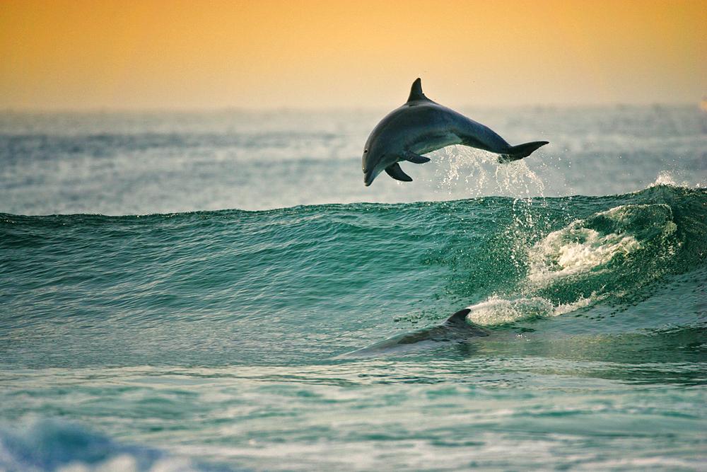 97 JumpingDolphins_ajneste_.JPG