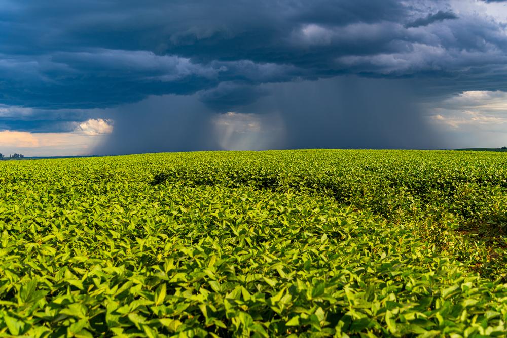 Depois da seca, agora são as chuvas que atrapalham as lavouras brasileiras de soja. (Fonte: Shutterstock/alex rodrigo brondani/Reprodução)