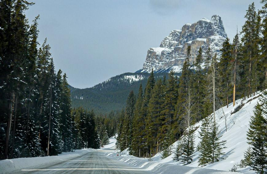 The Bow Valley Parkway is a particularly good spot for seeing wildlife in winter