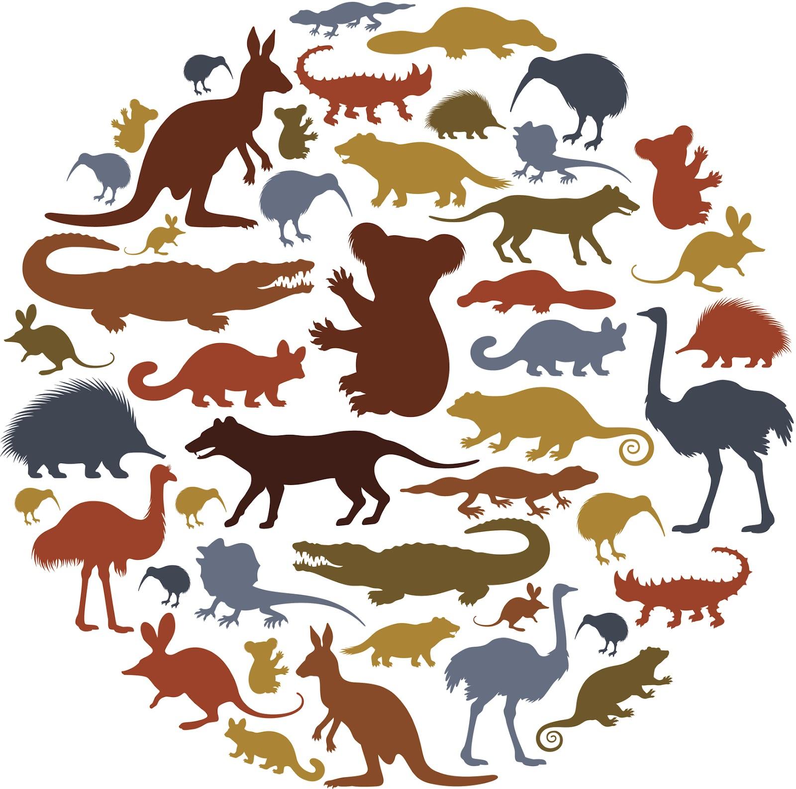 Животный мир картинки вектор