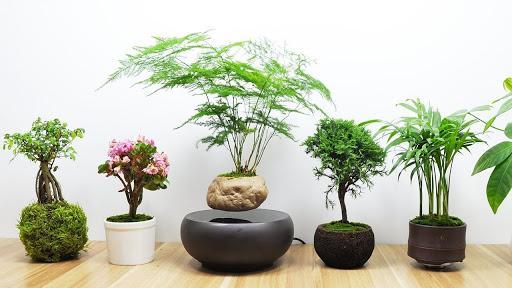 Ảnh có chứa cây, trong nhà, bàn, bình  Mô tả được tạo tự động