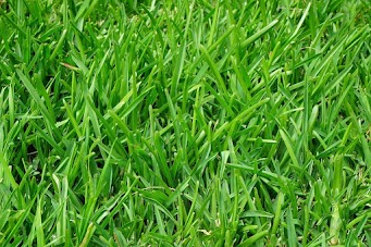"""""""The grass is soft and green."""""""
