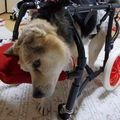 C:UsersuserDesktopTomomi2カット済み中型犬L4輪44.jpg