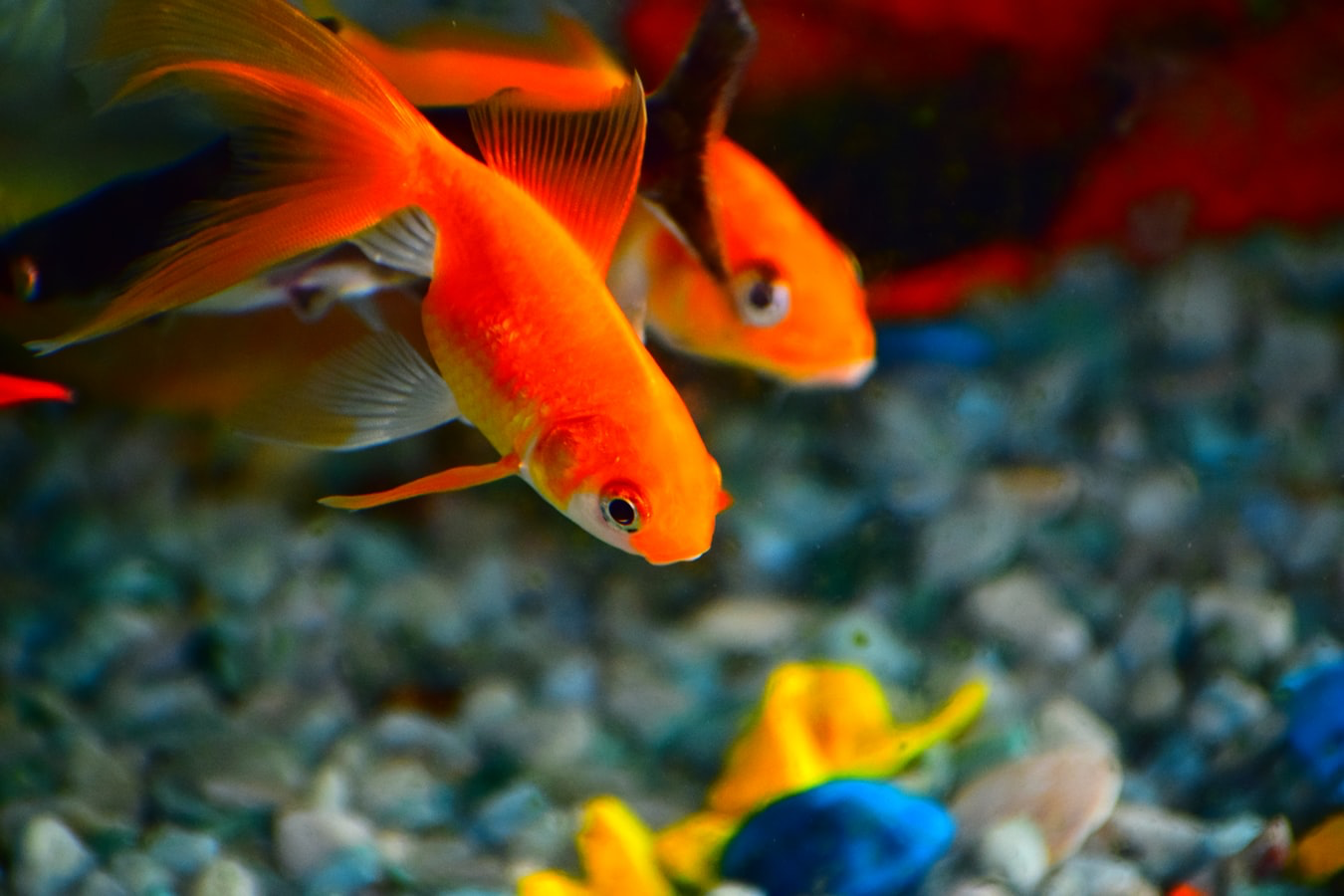 Two fish in an aquarium
