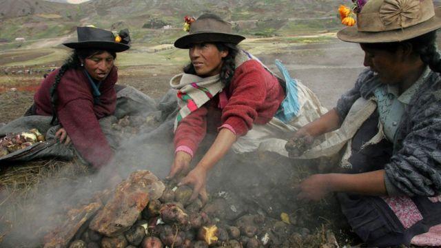 Перуанские женщины собирают картофель