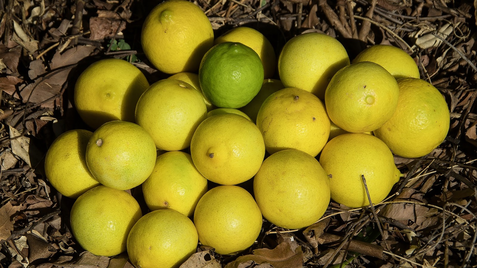 types of limes