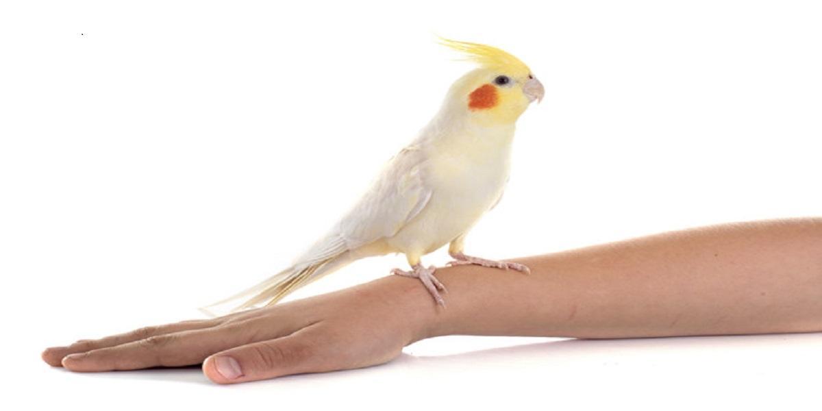 Pássaro em cima de uma superfície branca  Descrição gerada automaticamente com confiança média