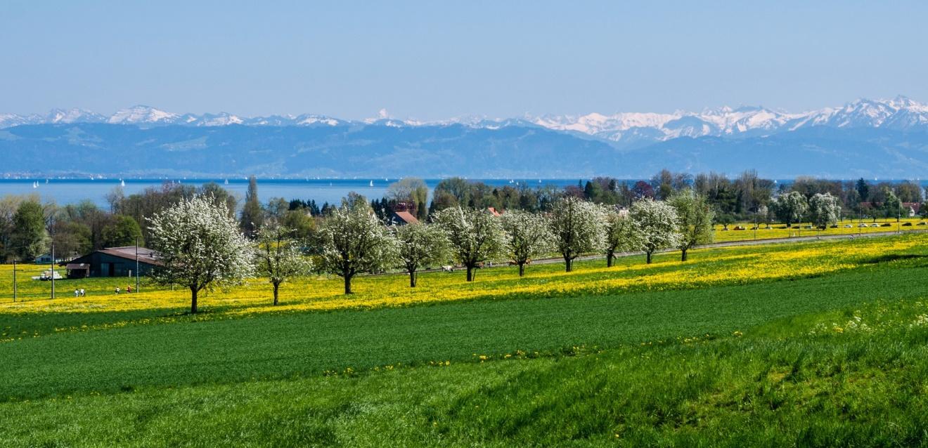 C:\janka\sajat\Jogász Cafe\Bodeni-tó_Bagó Tünde\Rajnától Rajnáig a Bodeni-tó mellett\Fotó12_kicsik.jpg