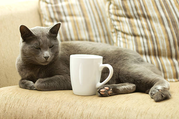 Cat on a sofa with white cup stock photo