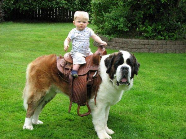 "Mammas Don't Let Your Babies Grow Up To Be Cowboys,"" unless they ..."
