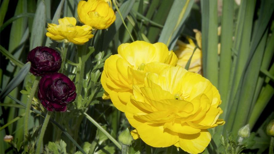 Lotsa Yellow.jpg