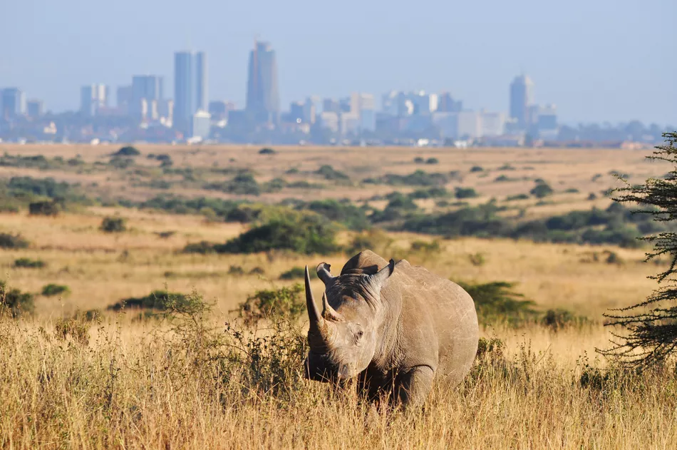 Nairobi National Park. Ultimate Nairobi City Guide - Part 2 by Young Lee @nakslee