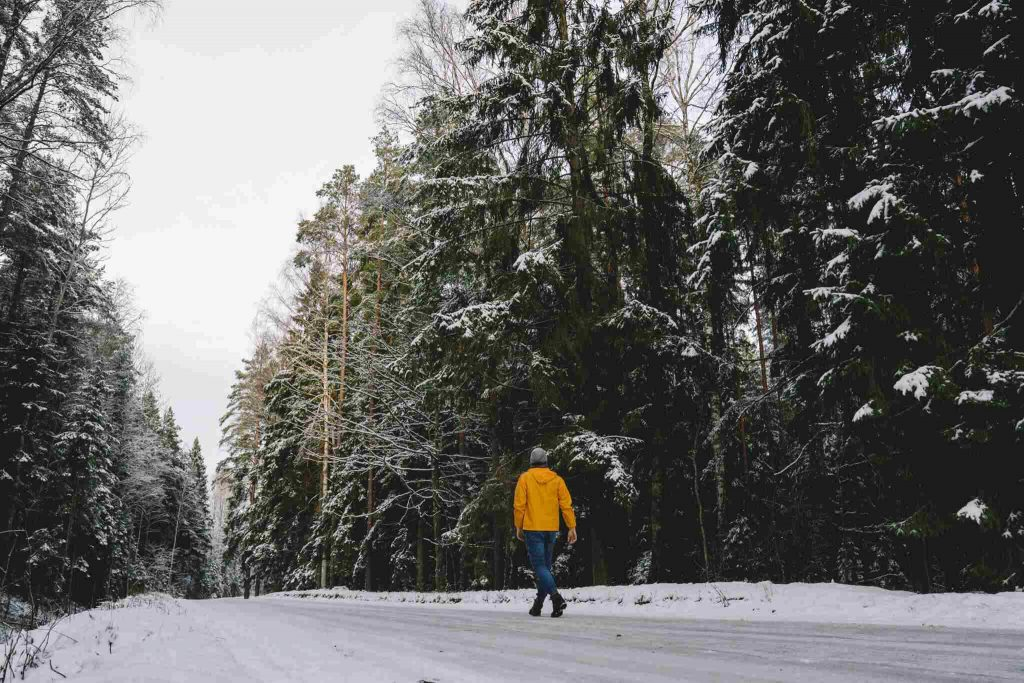 sustainability-journey-forest-winter