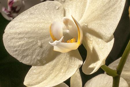 Annual-Creative-Macro-Closeup-Floral-Imaging-NYBG-2015-02.png