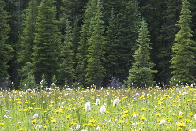 forest-dense.jpg