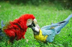 pet-parrots-outside-1-300x198.jpg