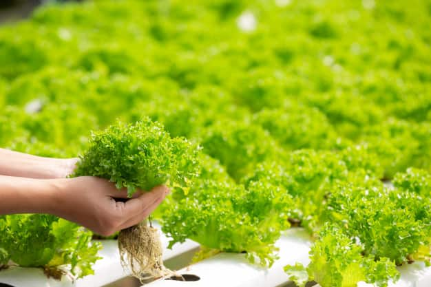 Make money by growing vegetables