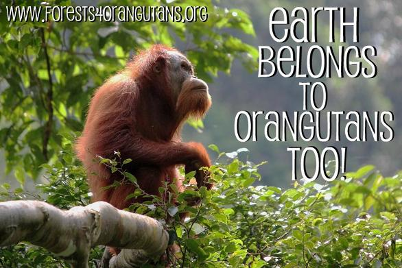 EarthBelongsForests4Orangutans.jpg.opt586x391o0,0s586x391.jpg