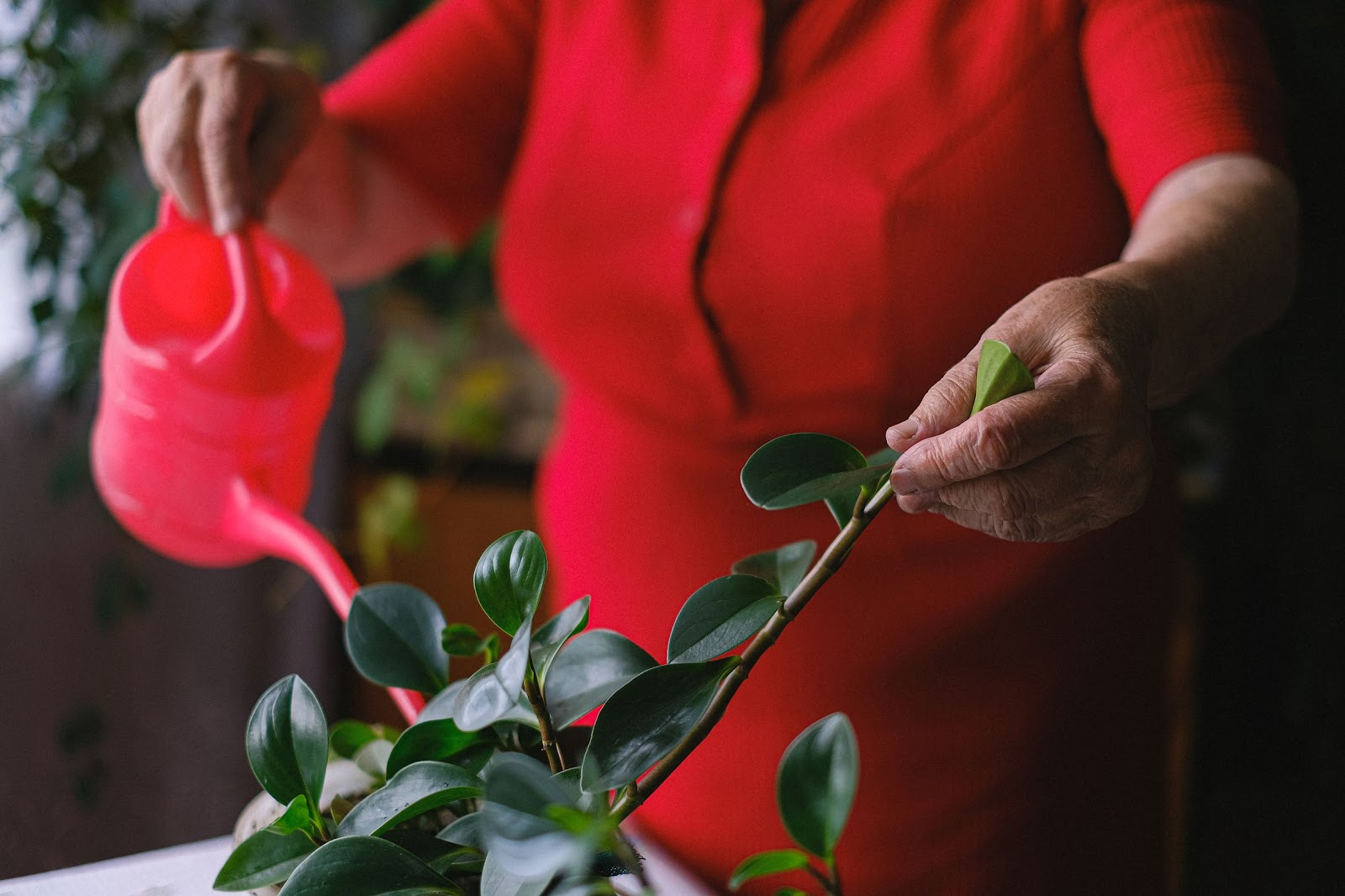 Woman wearing red watering a plant