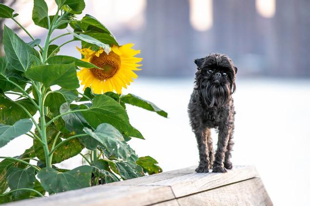 Gallery | Rachel Eve Pet Photography