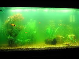 advantages of larger fish tank