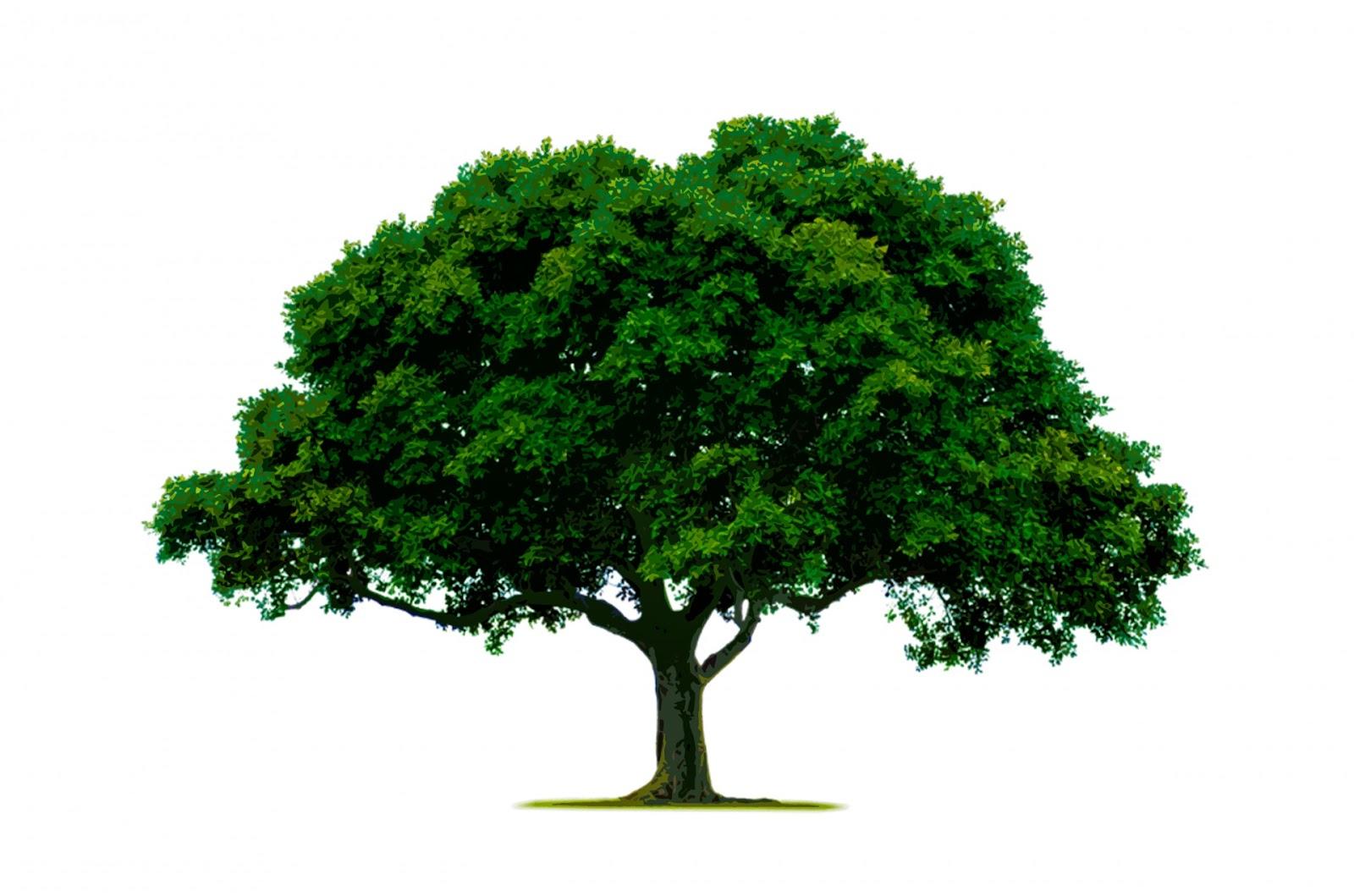 https://www.publicdomainpictures.net/pictures/180000/velka/tree-1465369020Wxg.jpg
