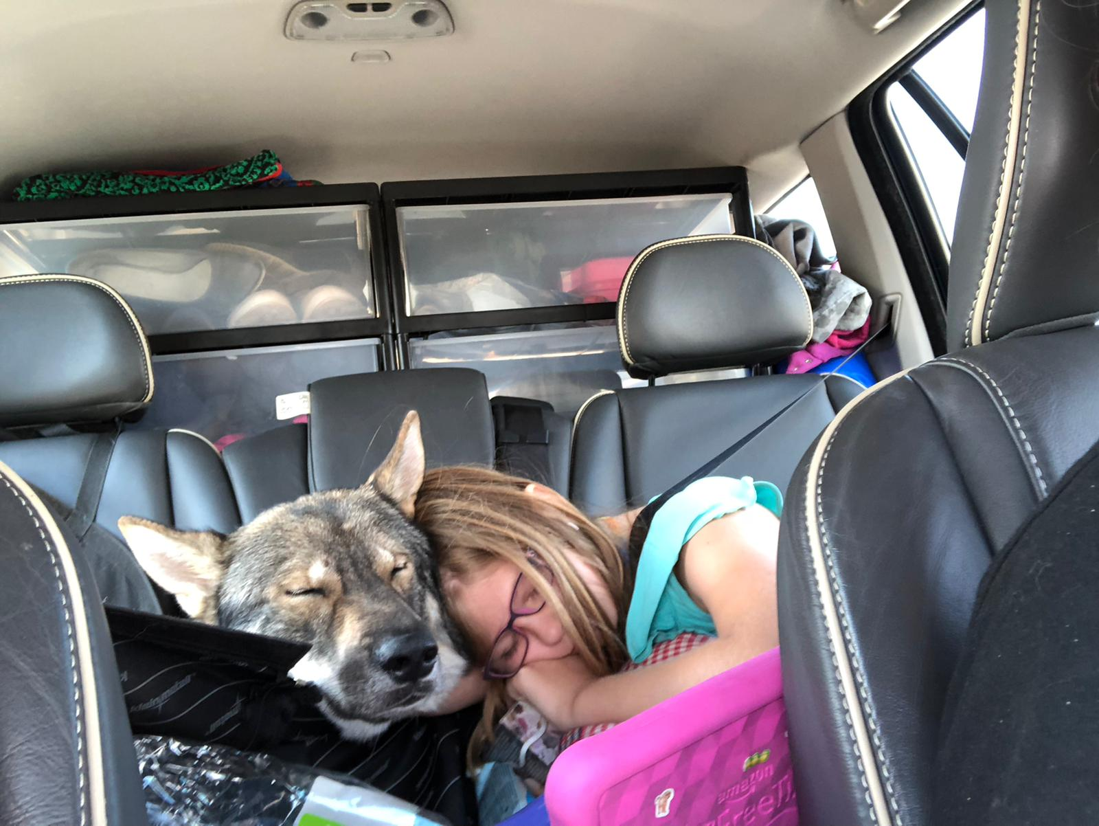 Kind und Hund schlafen auf der Rückbank.