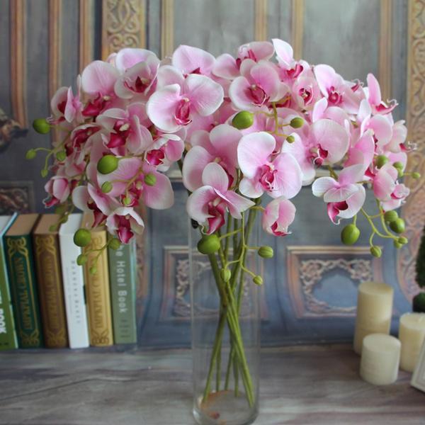 C:\Users\ADMIN\Desktop\orchids.jpg