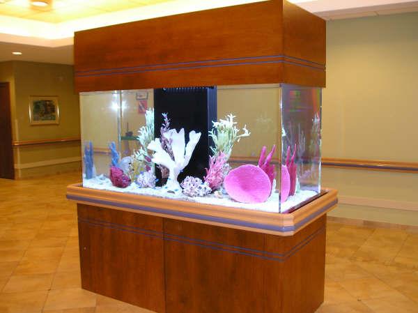 Aquarium shapes and sizes 1000 aquarium ideas for Rectangle fish tank
