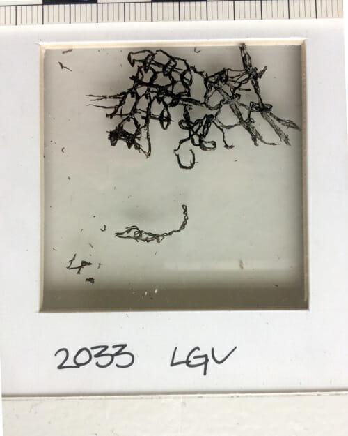 Bilde av forhistoriske fragmenter fra nålebinding 4200 år før kristus, strikkefragmenter, fragmenter fra nålebinding