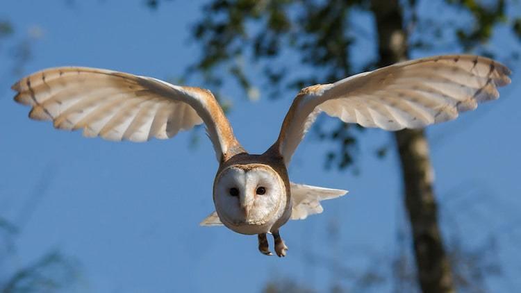 Take Bird Photos with MIOPS Laser Trigger