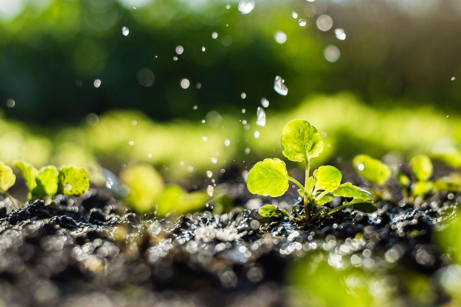A água é essencial para agricultura (Fonte: Embrapa)