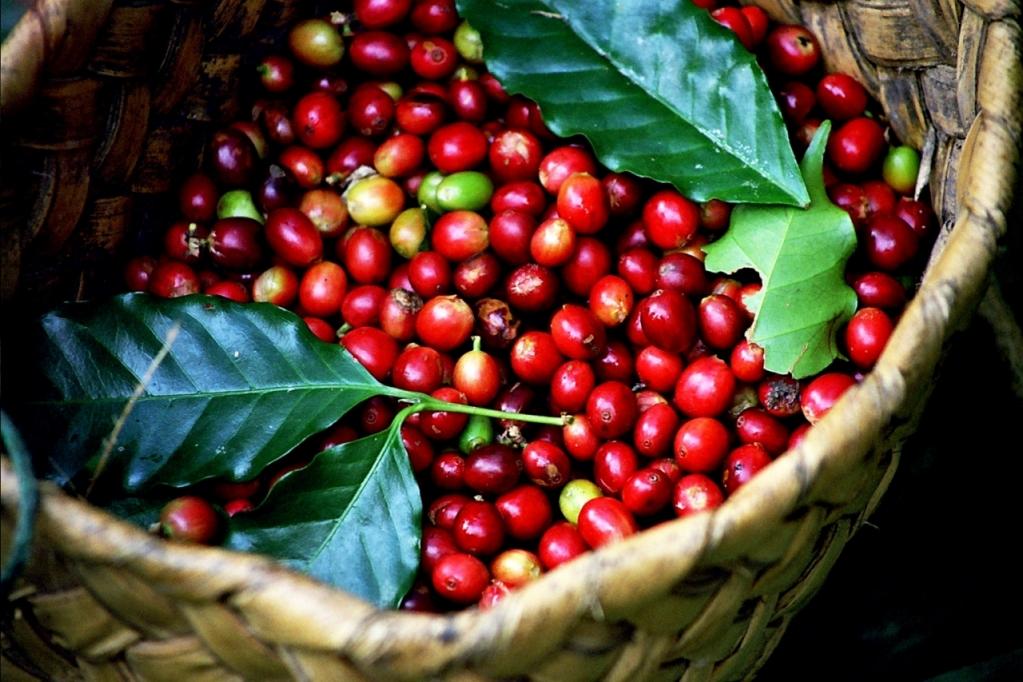 cà phê xuất khẩu