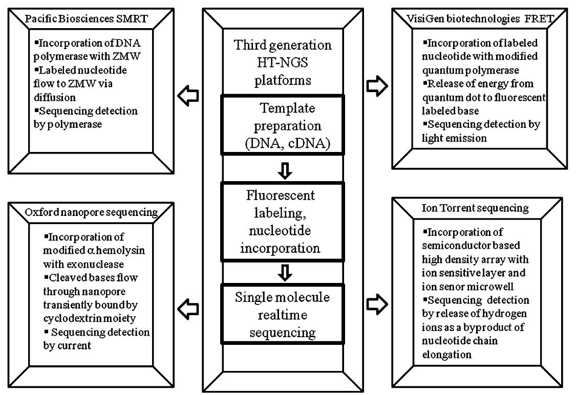 Sequenzierungstechnologie der dritten Generation. Bildquelle: Chandra Shekhar Pareek, Rafal Smoczynski, Andrej Tretyn, Wikimedia Commons
