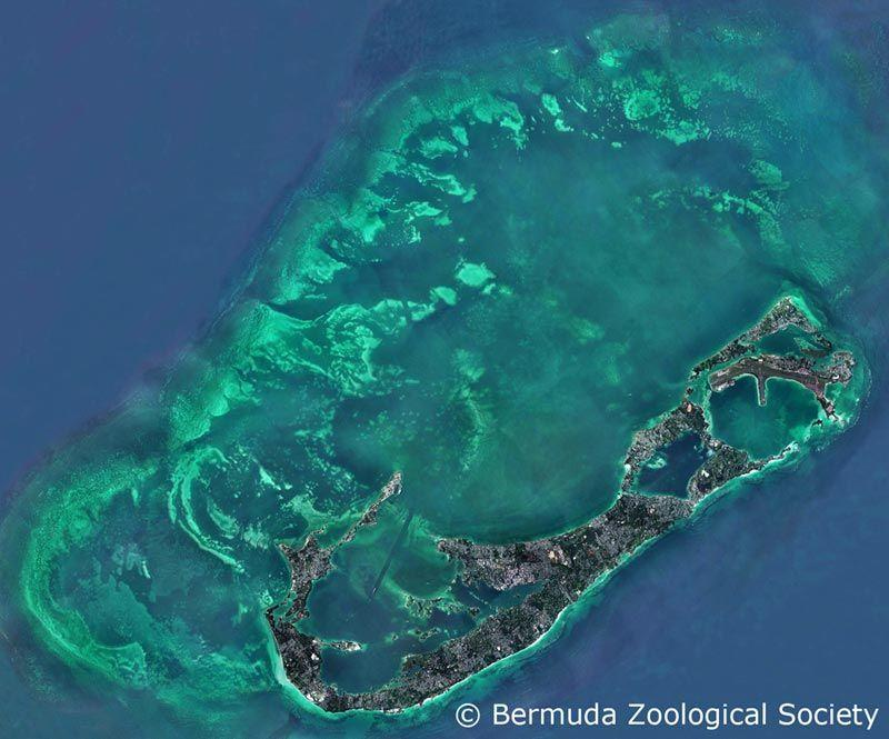 Bermuda Outer Reef Snorkeling - The Best Corals And Big Fish ...